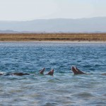 Atacama: Passeios