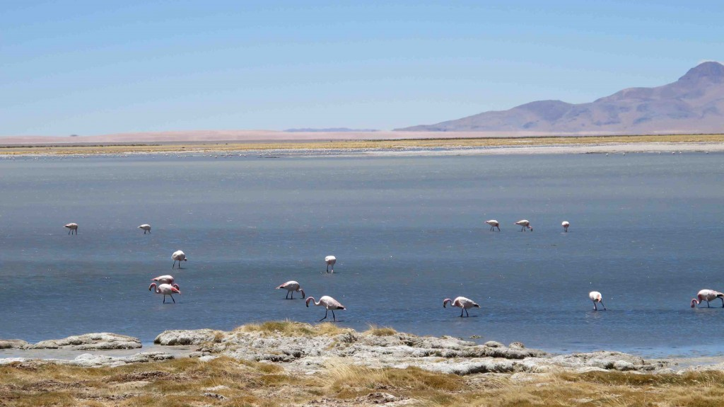 blog-love-shoes-atacama-salar-de-tara10