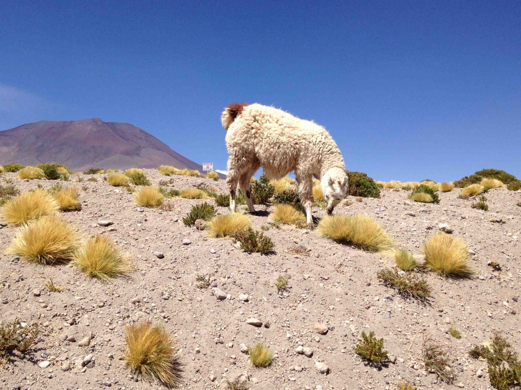 blog-love-shoes-atacama-salar-de-tara12